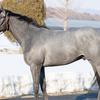 2019-2020 POG 牡馬第9位