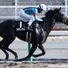 タコイチの【今週の勝負レース】新涼特別!