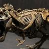 『小学8年生』付録!ティラノサウルス骨格プラモデルを組んでみた!