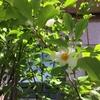 北海道は新緑と花の季節
