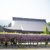藤を見るだけで500円は高いかな:瑞泉寺
