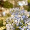 珍しいお花が沢山!😳