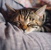 これであなたも【猫名人】猫にまつわる雑学10選