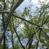 2021.06.27㈰ 昨日も竹の戯れ。