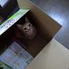 猫さんは箱がお好き