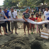 【宏観】フィリピンでリュウグウノツカイ捕獲→2日後にM6.5の地震発生~日本でも深海魚が出現