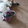 猫とおばあちゃんの帽子シリーズ【最強】