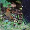 新潟探鳥 3