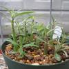 植物を種からを育てる。