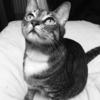 かわいそうな猫氏