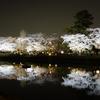 長岡天満宮 八条ヶ池の夜桜