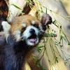 【北海道2600kmクルマ旅その6】旭川の名所、旭山動物園で眠そうな動物たちと遭遇!