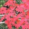 万博記念公園の紅葉②観光44...20191124大阪