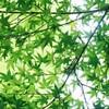 5 『古事記』に対する極端なスタンス