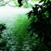 木陰とさざ波 光る波間と揺れる木の葉と