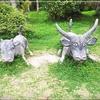 西表島1日ツアーに子供と参加。マングローブクルーズと水牛で満喫!
