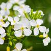 男の女の好きなタイプは、好きな花を聞けばわかる説
