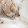 何度目だ💦保護猫カフェBoni's Houseさんへ💛②