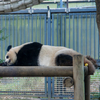 上野動物園へ一人で行ってきたけどすーっごく楽しかった【ソロプレイのススメ】
