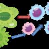 新型コロナウイルス 「感染7段階モデル」について その3 自然免疫と獲得免疫について 後編 <獲得免疫とサイトカインストーム>