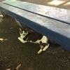 袖ヶ浦公園にて猫とお遊び