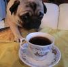 世界中で飲んだコーヒー