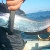 夏は太刀魚!博多湾でタチウオジギング。