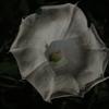 夏の夜に咲く白い花と
