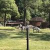 のいち動物公園(高知県)が『人気の動物園・水族館ランキング』で1位(=゚ω゚)ノ