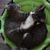 我が家のおすすめ!猫用ハンモックベッド
