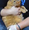 愛猫『ゴエモン』の活躍で住居侵入してきた無職の男を逮捕!お前なんかとは格が違うニャ~(^^♪