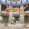 数100点にわたる横浜美術館コレクション、そして「横山大観 画業と暮らしと交流」展