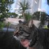 1月前半の #ねこ #cat #猫 その3