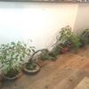 山採り盆栽の魅力