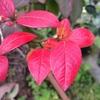 ダロウとブルーレイの紅葉は綺麗だなあ