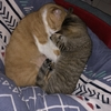 【猫ブログ】たかしとサラは仲いいの?4
