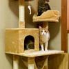 猫グッズのおすすめは?多頭飼いもOKのキャットタワーに毛ブラシはコレ!