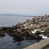 鳥取釣り場 中野港 竹内団地