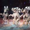 イギリスでもサーカスでの動物利用を禁止へ すでに40か国以上で実現