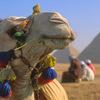 エジプトのピラミッドが、ぼくの人生を変えた!なんて大げさな事は言わないけど、(旅)をした方が良い。