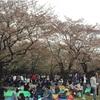 【お花見】代々木公園 桜の状況 2016/4/9 もう葉桜…からの〜?