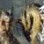 【MHRize】クソモンスター筆頭はオロミドロでよろしいでありんす?