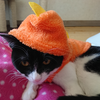 今日の黒猫モモ&白黒猫ナナの動画ー879