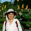背景はベリーズの野生生物保護区の黄色い花