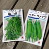 野菜タネ蒔き