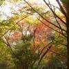 紅葉狩―鎌倉紅葉谷―