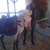 馬たちのクリスマス&正月