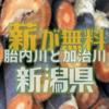 新潟県の胎内川と加治川では、同日に伐採木の無料配布が行われます