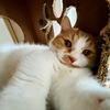 君の名は…るるちゃんの子猫の頃の名前が血統書に書いてありました。