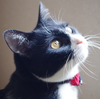 今日の黒猫モモ&白黒猫ナナの動画ー693